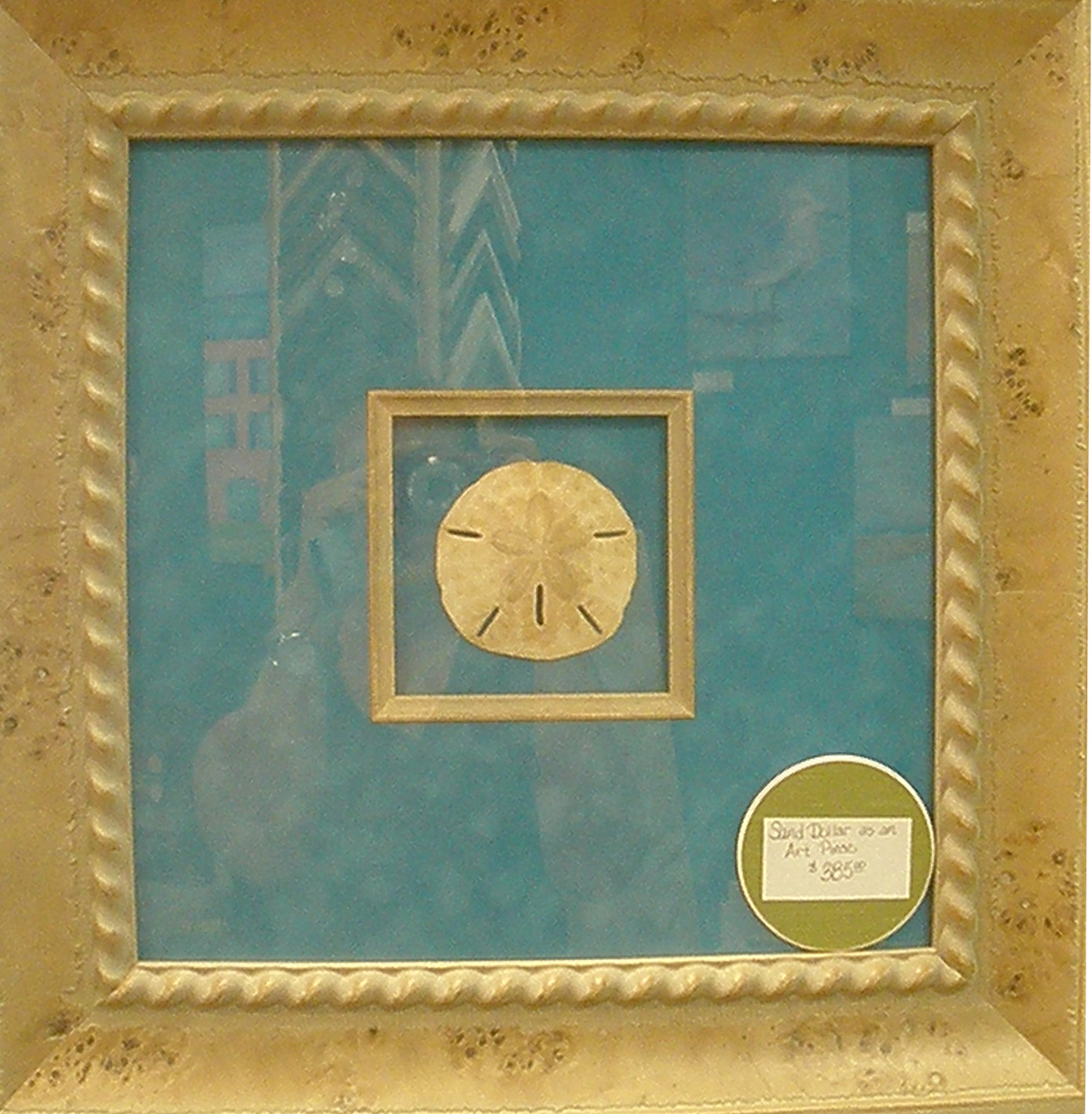 A framed sand dollar at Right Angles Framing and Art